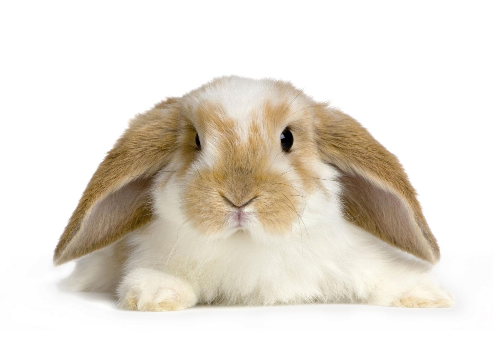 A wabbit